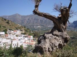 Giannou, Crete, Greece